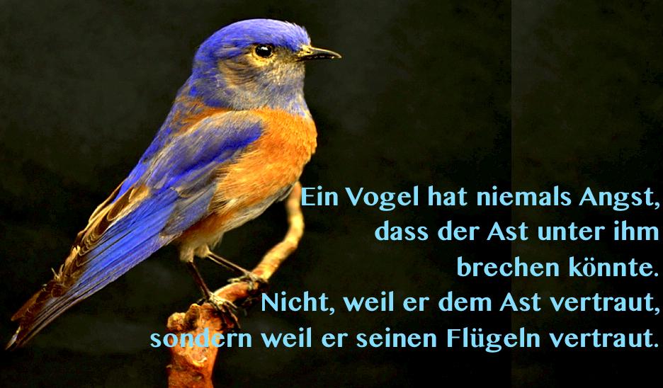 Vogel_Vertrauen2