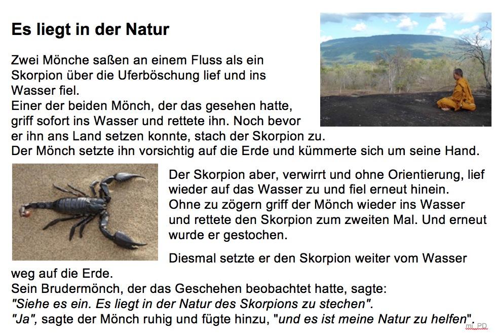 Skorpion_Natur