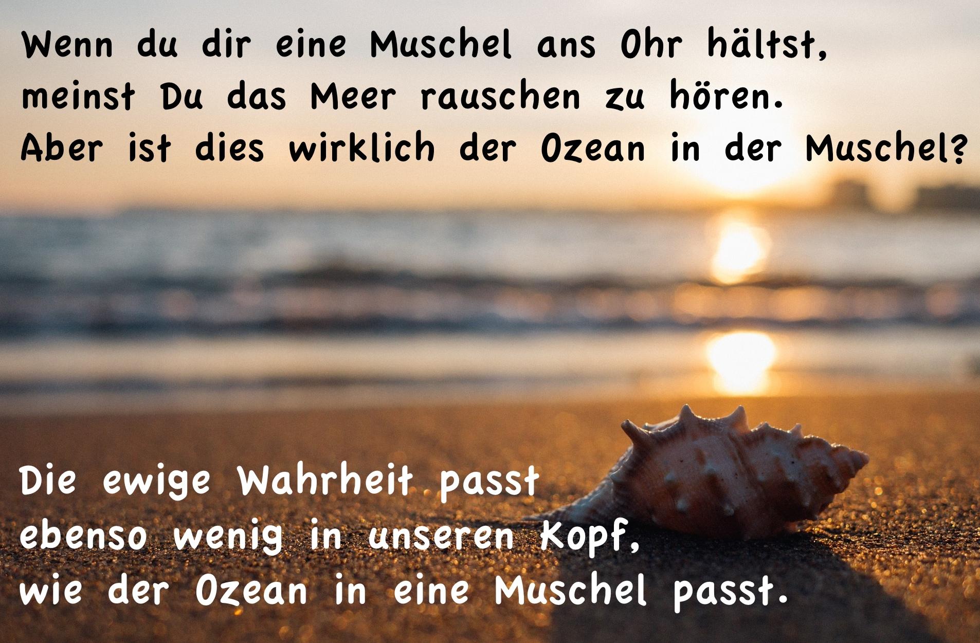 Muschel_Meer3